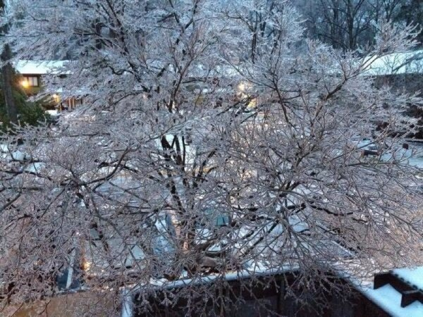 Ice covered tree in Reston/Credit: Mary Dominiak via Twitter