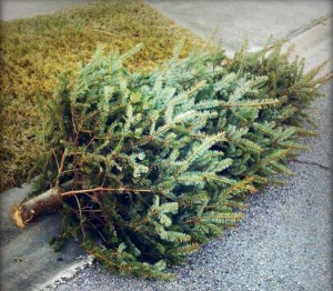Recycling Christmas Trees/File photo