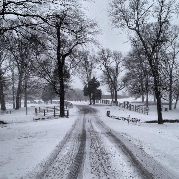 Snow in Reston on Jan. 21/Credit: Robbie Nolan