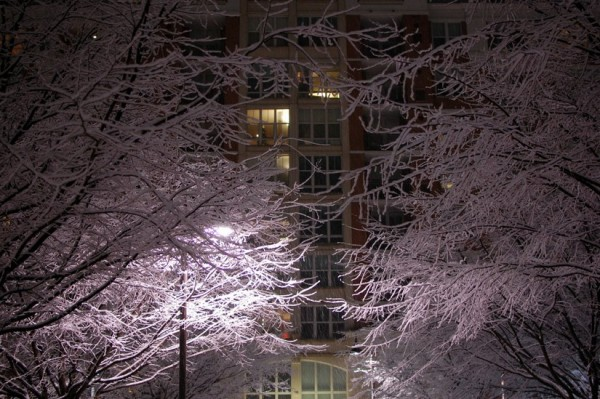 Snow-covered Reston trees/Credit: J0nathan via Flick