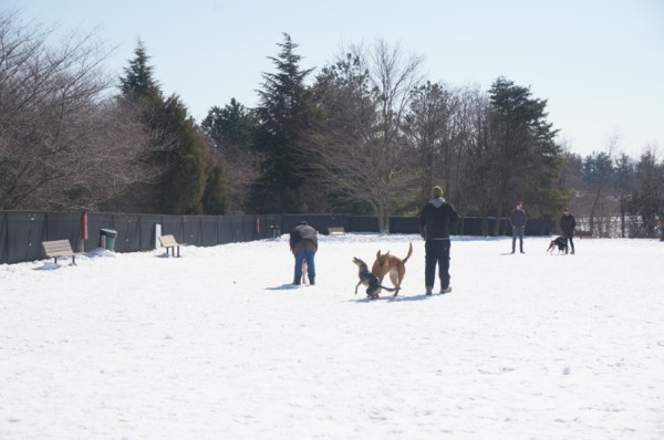 Reston Dog Park at Baron Cameron Park