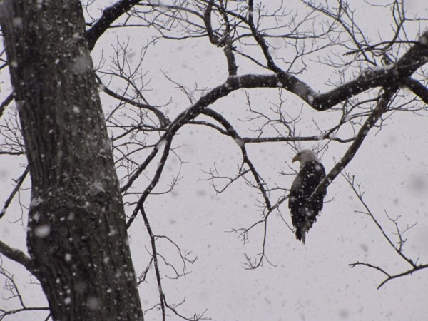 Eagle near Lake Audubon/Credit: Beth Burns