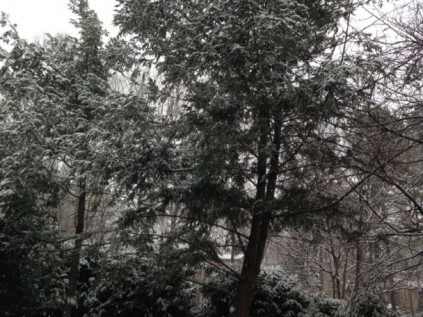 Snow in Reston on Feb. 25