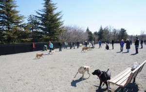 Playtime at the dog park
