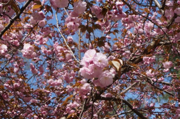 Spring in Reston