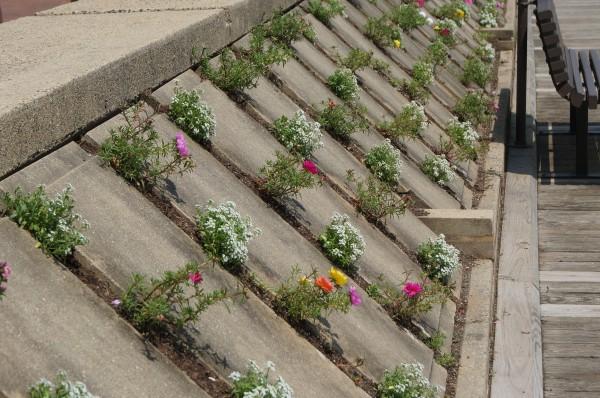 Plantings at Lake Anne Plaza