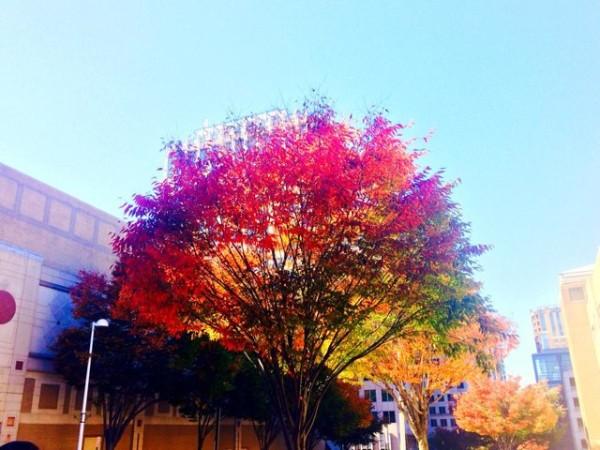 Pretty colors at Reston Town Center/Credit: Reston Town Center