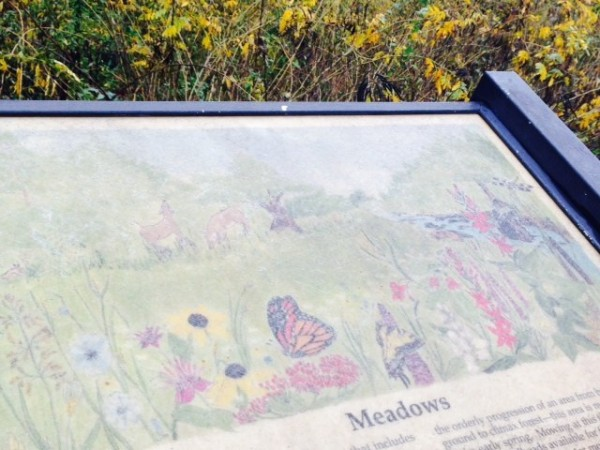 The Meadow on the RA trail