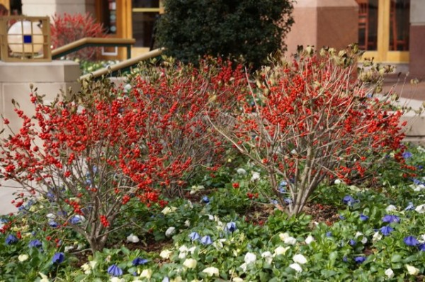 Winter plants at Reston Town Center