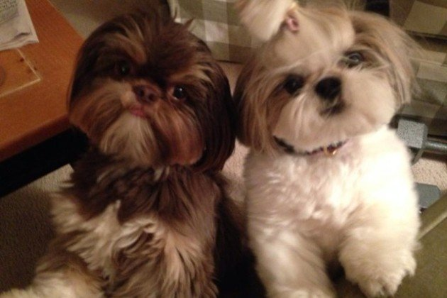 Beanie (left) and Bella
