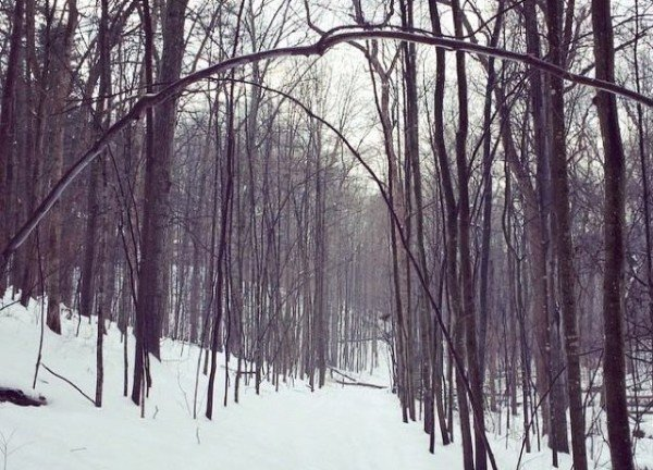 Twin Branches Trail in snow/Credit: Julie McCool, Fun in Fairfax