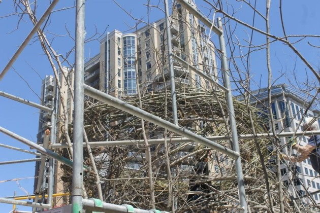 Building Patrick Dougherty's project at Reston Town Center