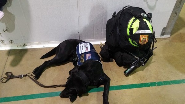VA-TF1 Dog and Supplies/Credit: Fairfax County Fire Rescue