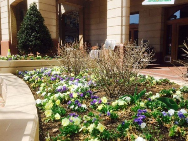 Spring flowers at Reston Town Center