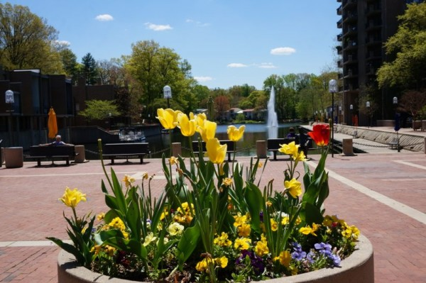 Spring flowers at Lake Anne Plaza