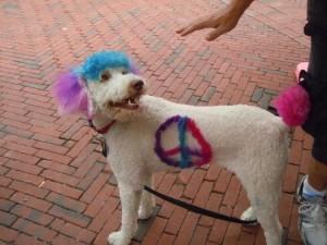 Pet Fiesta dog