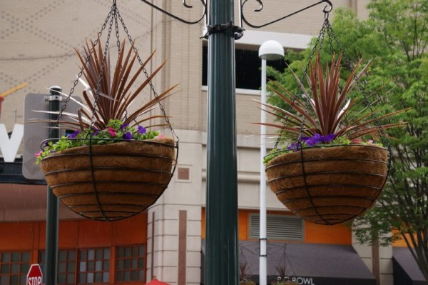 Hanging baskets at Reston Town Center