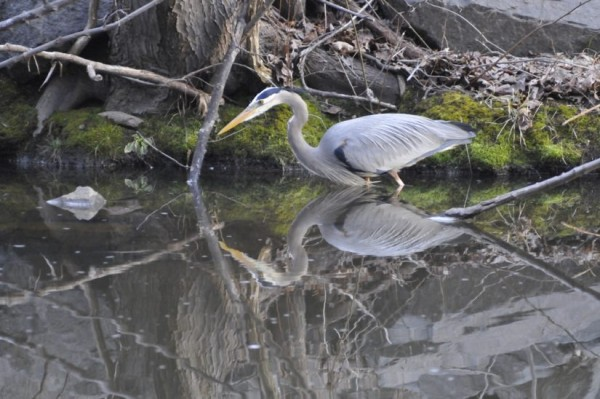 Heron at Lake Audubon/Credit: Sam Simon