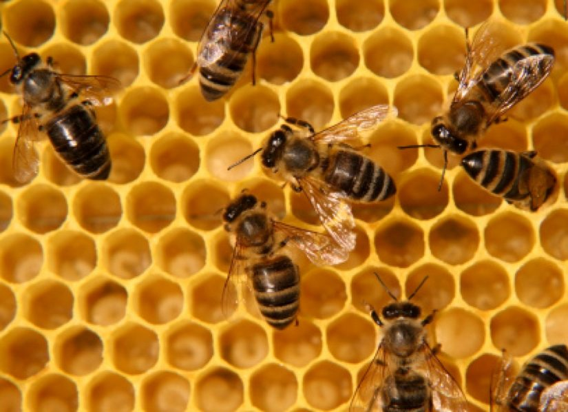 Reston association might have some new members soon a couple of hives
