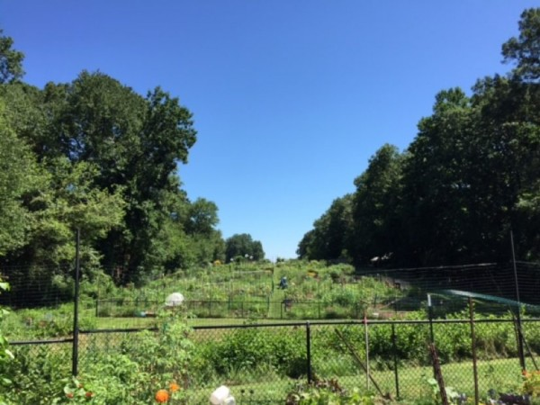 Community Garden at Hunters Woods