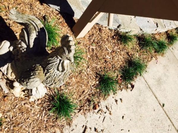 Statue in a Reston garden