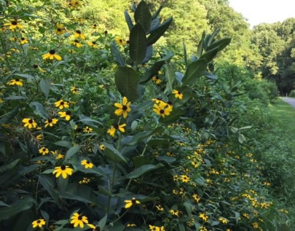 Flowers on path near Lake Thoreau