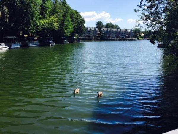 Ducks on Lake Thoreau