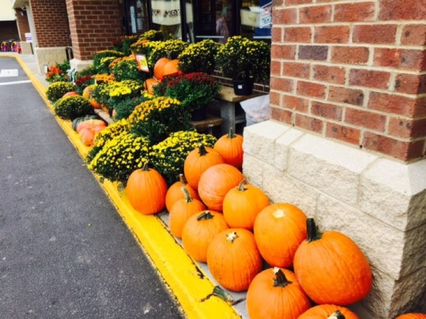 Fall on sale at Fox MIll