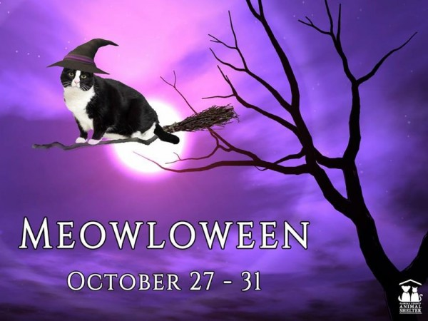 Fairfax County Animal Shelter's Meowloween