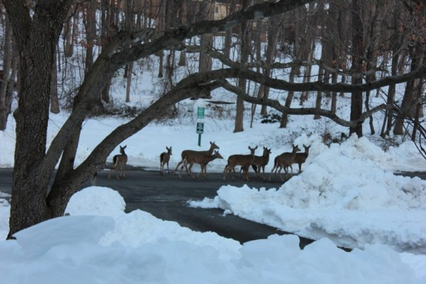 Deer crossing on Triple Crown/Credit: Bob Wolf