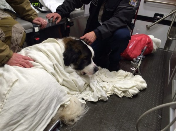 Fairfax County Firefighters recused a St. Bernard from an icy lake/Credit: Fairfax County
