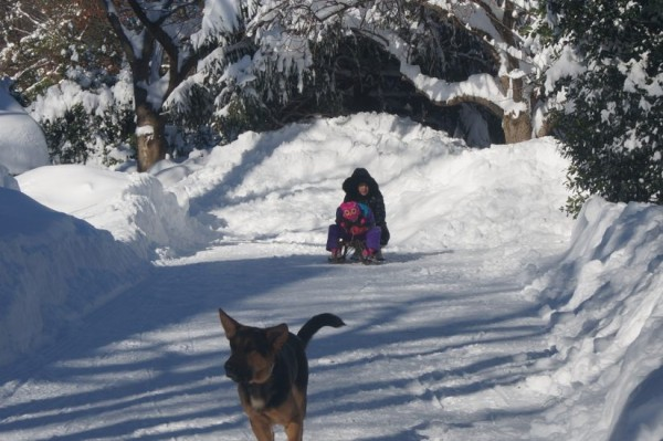 Driveway sledding on Jan. 24, 2016