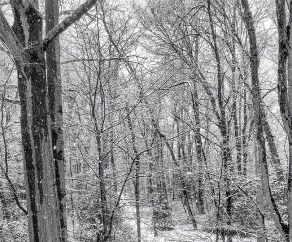 Snow in Reston on Feb. 9, 2016/Credit: Robbie Nolan via Twitter