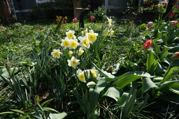 Spring flowers in Reston