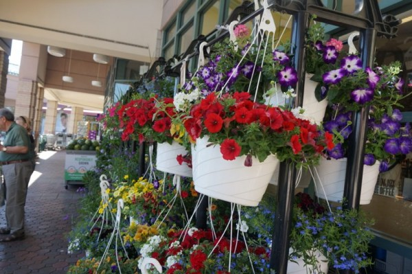 Flowers at Reston Whole Foods