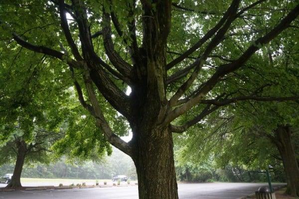 Tree at Lake Newport Soccer