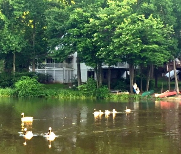 Lake Audubon