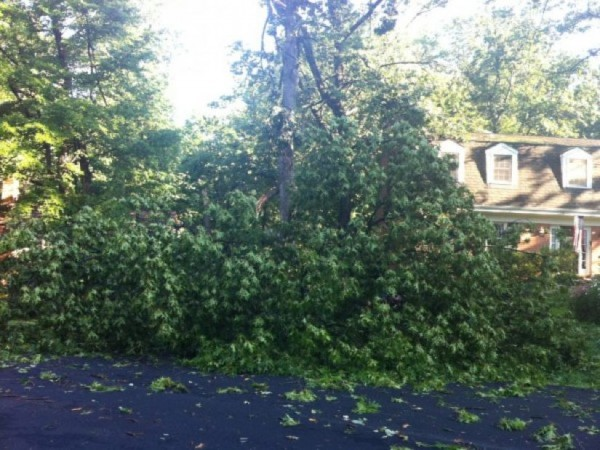 Tree down in Reston derecho, June 2012/file photo
