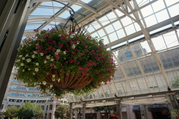 Flowers at Reston Town Center Pavilion