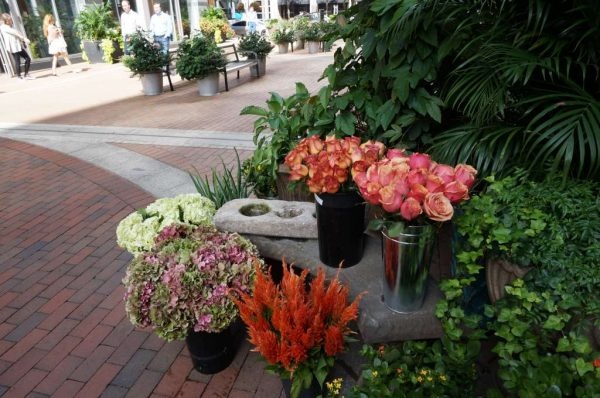 Mayflowers at Reston Town Center