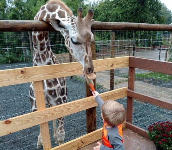 Waffles the Giraffe and a young visitor/Credit: Roer's Zoofari