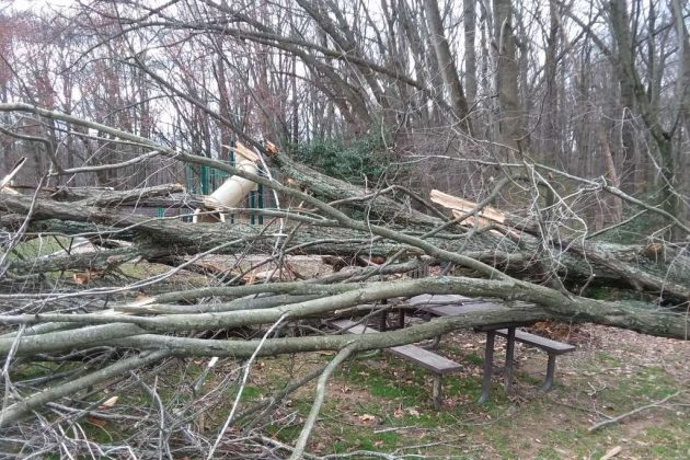 Fallen trees at Bordeaux Recreation Area (Photo by Gary Smith)